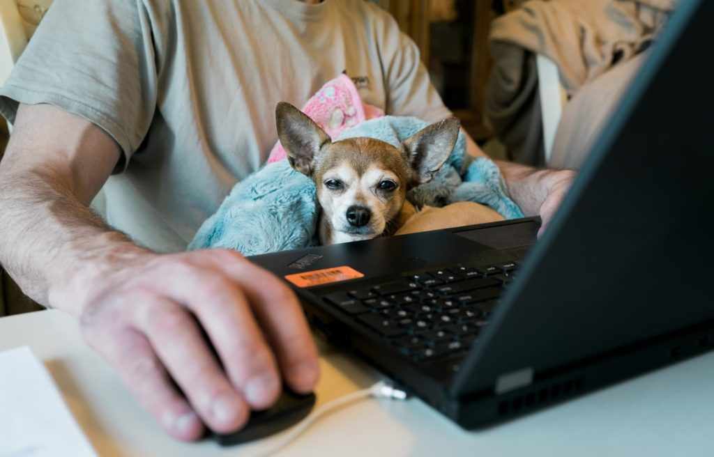 dog on laptop with human